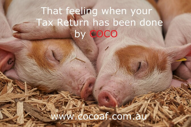 "Piglets resting in hay with words in picture that say""That feeling when your Tax return has been done by COCO"""